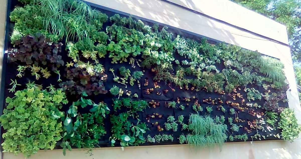 El ead barajas instala un jard n vertical en el ceip for Ceip ciudad jardin