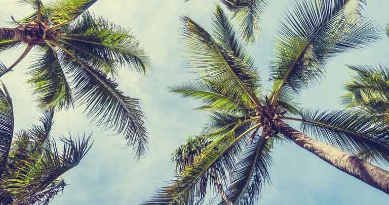 Foto de palmeras